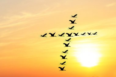 Beautiful & heavenly sky in the evening with birds forming holy