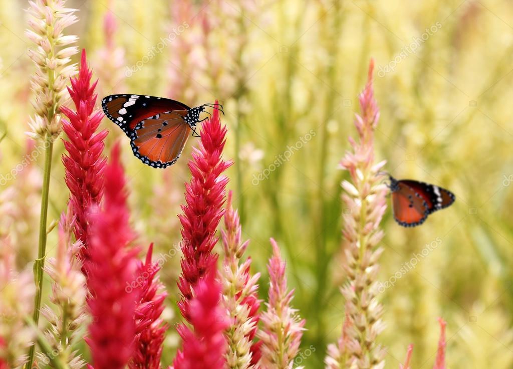 Beautiful monarch butterfly on summer grass flowers.