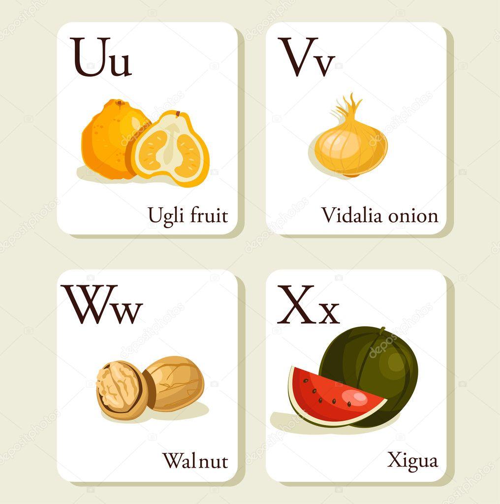 Vector fruit alphabet for education. illustration for kids. letter u for ugli  fruit.