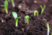 Photo small green seedling