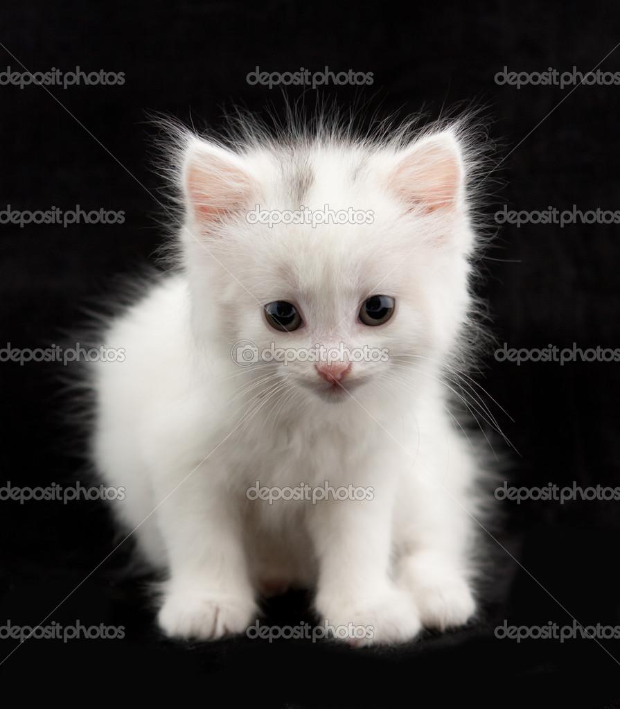 Bellissimo gattino bianco seduto su uno sfondo nero \u2014 Foto di photovova