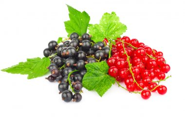 Red and black currant