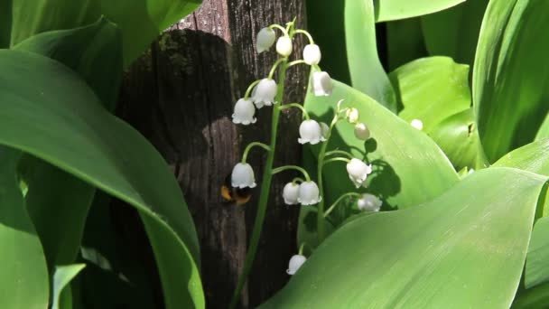 Bee and lily of the valley