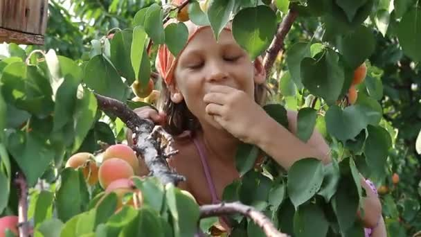 The child tears the branches of apricots