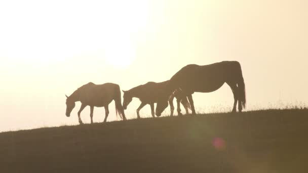 Horses grazing on a hill against the setting sun