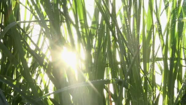 sprej do vysoké trávy