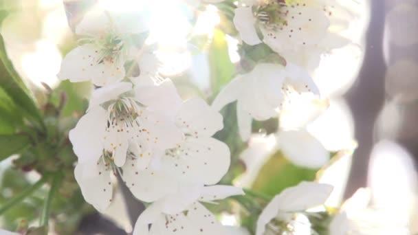 sluneční květiny