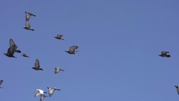 galambok gyülekezete az égen