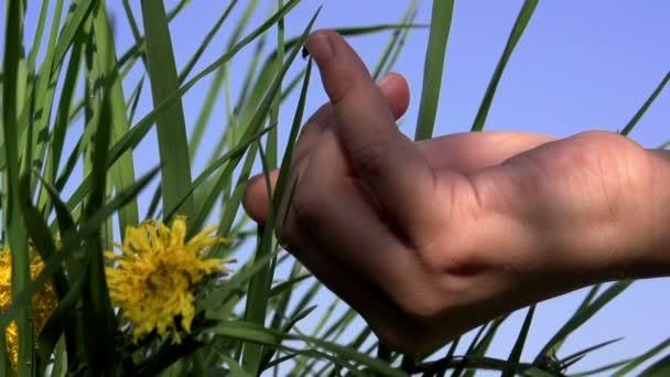 coccinella sul dito