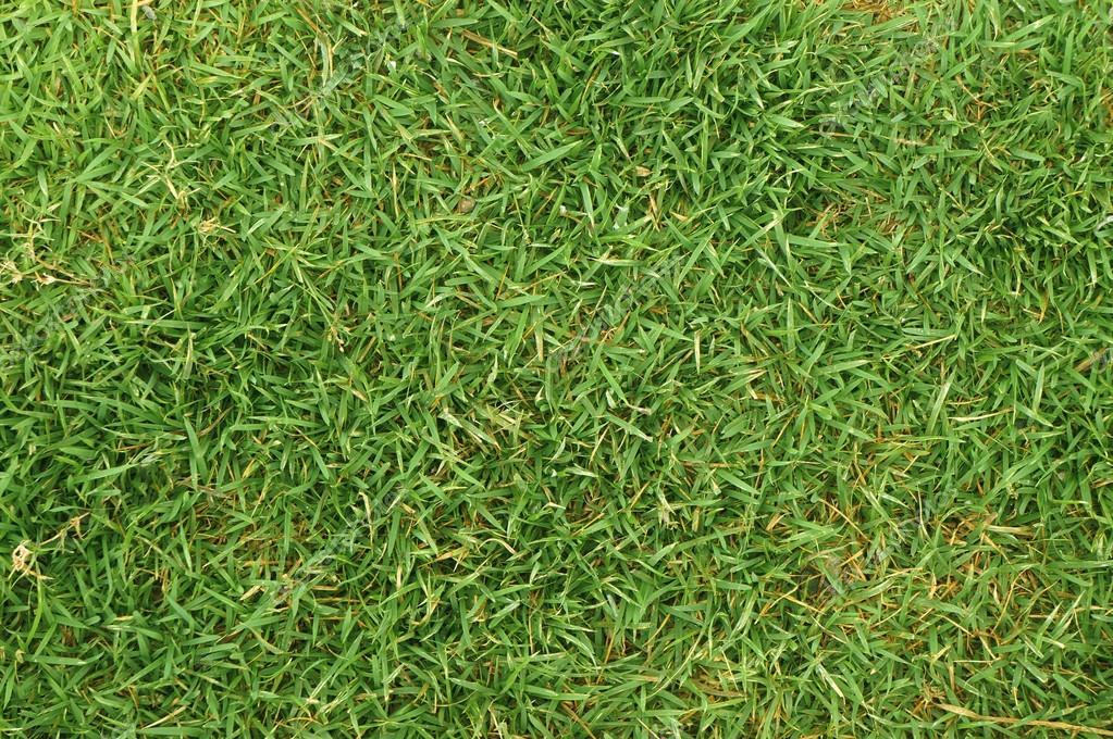 Gras achtergrond u stockfoto vichie