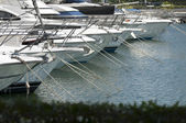 Photo Yachts moored in marina