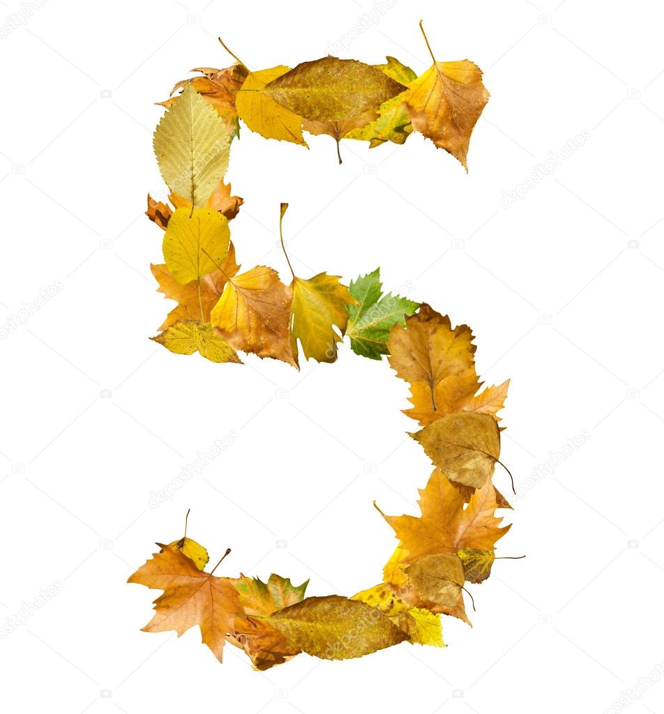 Number five made of autumn leaves.