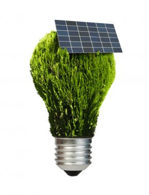 Lamp made of green plants. Ecology conception