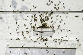 včely do úlu