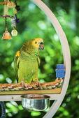 zelený papoušek