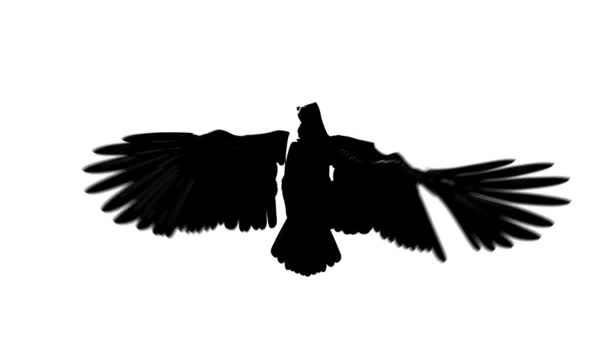 Silhouette looping flying eagle front view