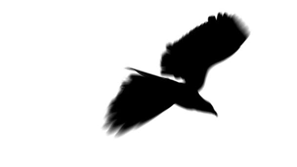 silueta přistání orel