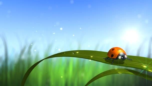 coccinella con sfondo cielo ed erba
