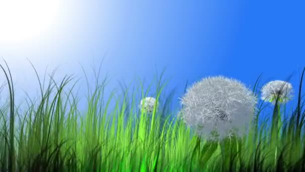 Pampeliška a trávy s létáním chmýří