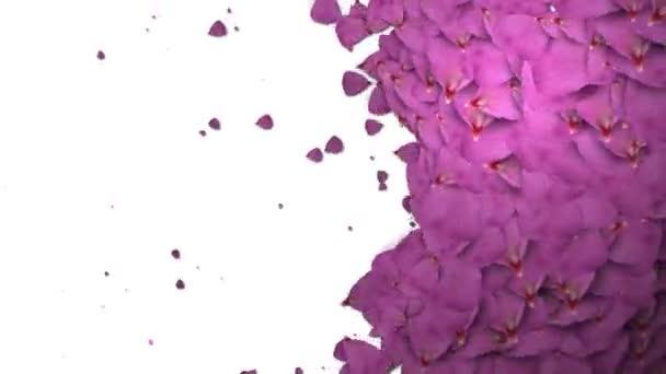 animovaný růží přechod s izolát maskování kanál