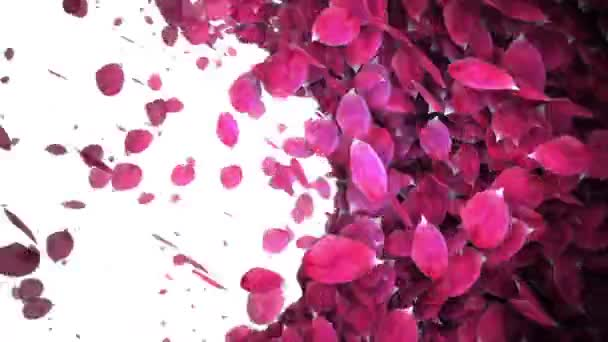 animated celebrate rose petals transition