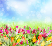 Fotografia primavera tulipani