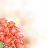 Fotografia rose