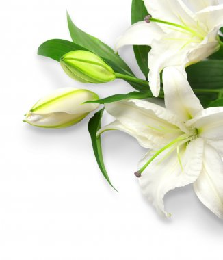 Bouquet of white lilies on a white background stock vector