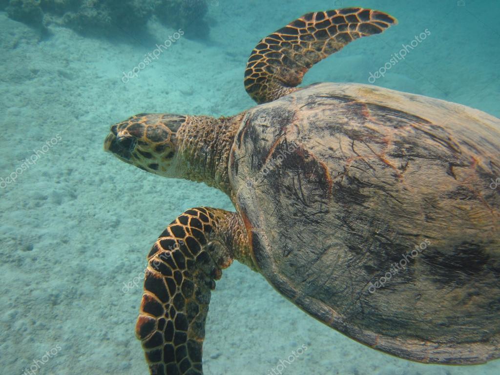 Schildkröten in tropisch unterwasser — Stockfoto © yogo #40949065