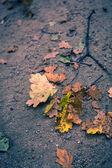 Fotografie podzimní závody