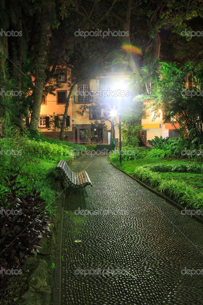 Фотообои тропический парк ночью
