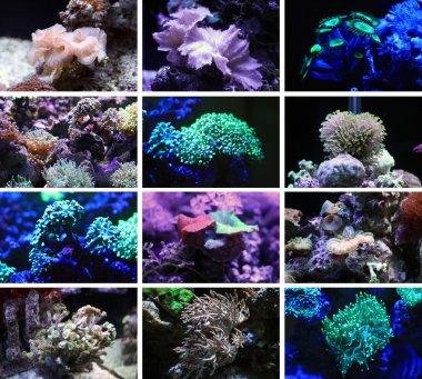 Corals. The inhabitants of the underwater world.