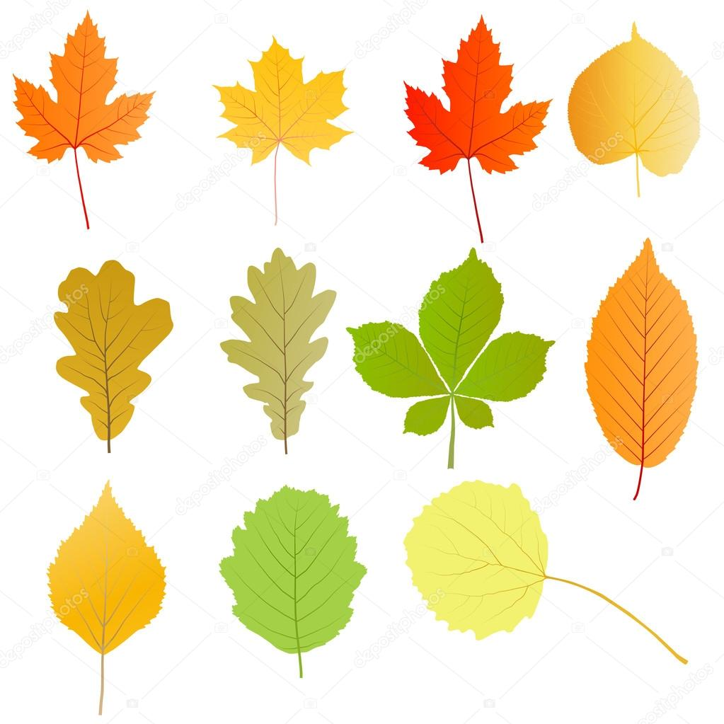 Autumn leaves set vector background