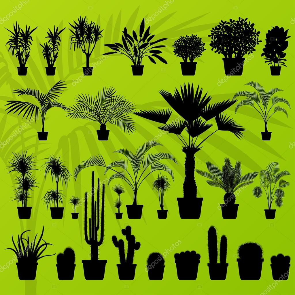 Exotic plant, bush, palm tree and cactus detailed illustration