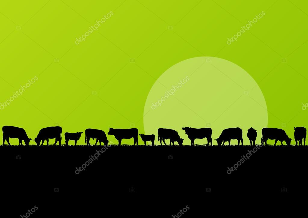 Beef cattle and milk cow herd in countryside field landscape ill