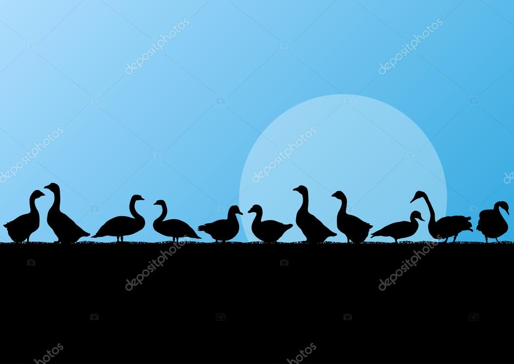 Farm duck and goose silhouettes in countryside landscape illustr