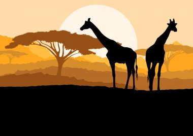 Giraffe family silhouettes in Africa wild nature mountain landsc