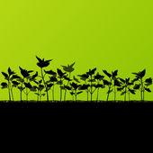 kopřivy divoké byliny rostliny detailní siluety ilustrace zpět
