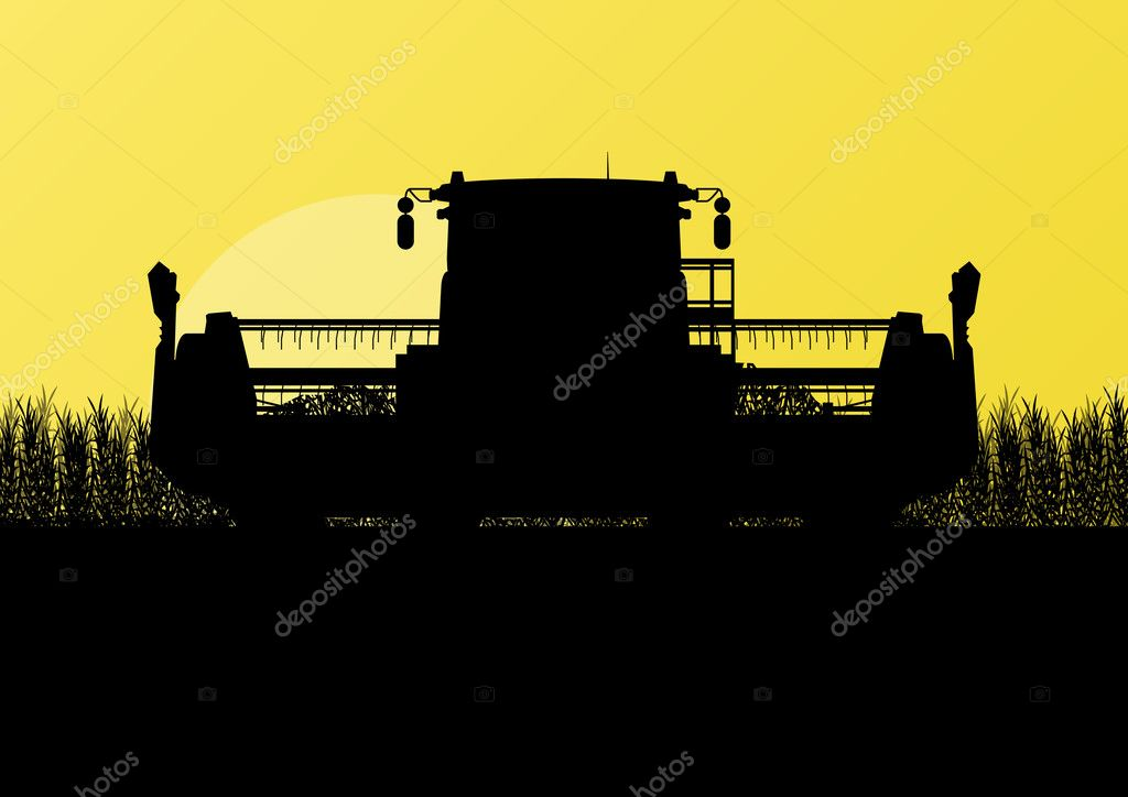 Agricultural combine harvester in grain field seasonal farming l