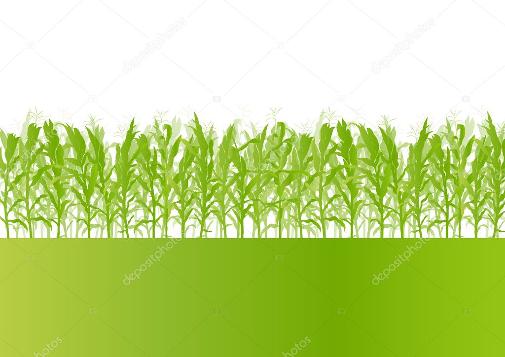 Corn field detailed countryside landscape ecology illustration b