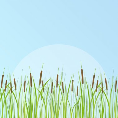 Cattail detailed illustration background