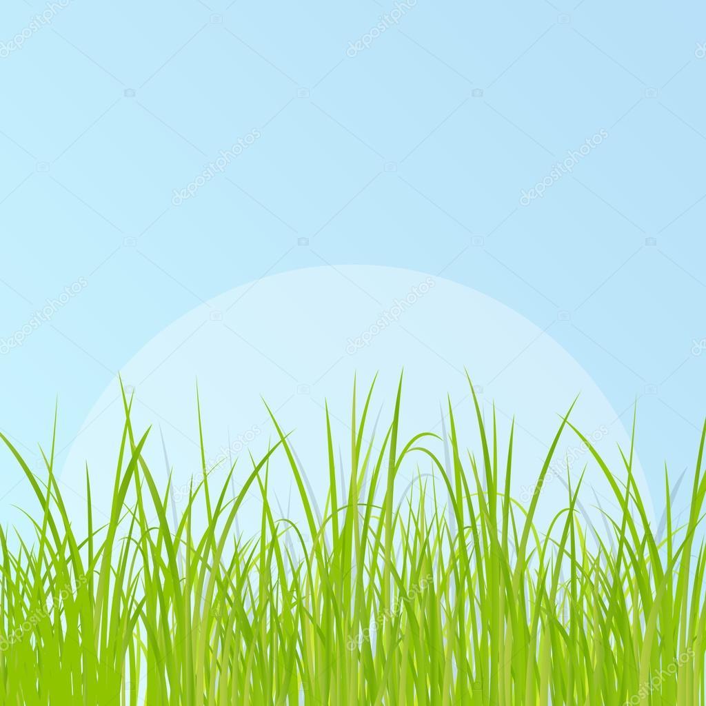 草の詳細なイラスト背景 ストックベクター K3studija 42988903