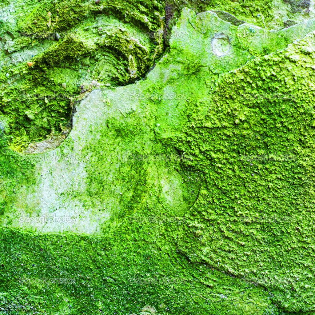 Tekstury Zielone Sciany Z Formy I Mech Zdjecie Stockowe C Toluk