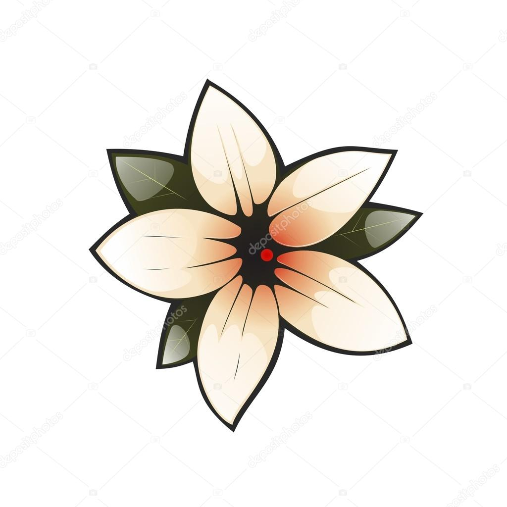 The image of Magnolia flower