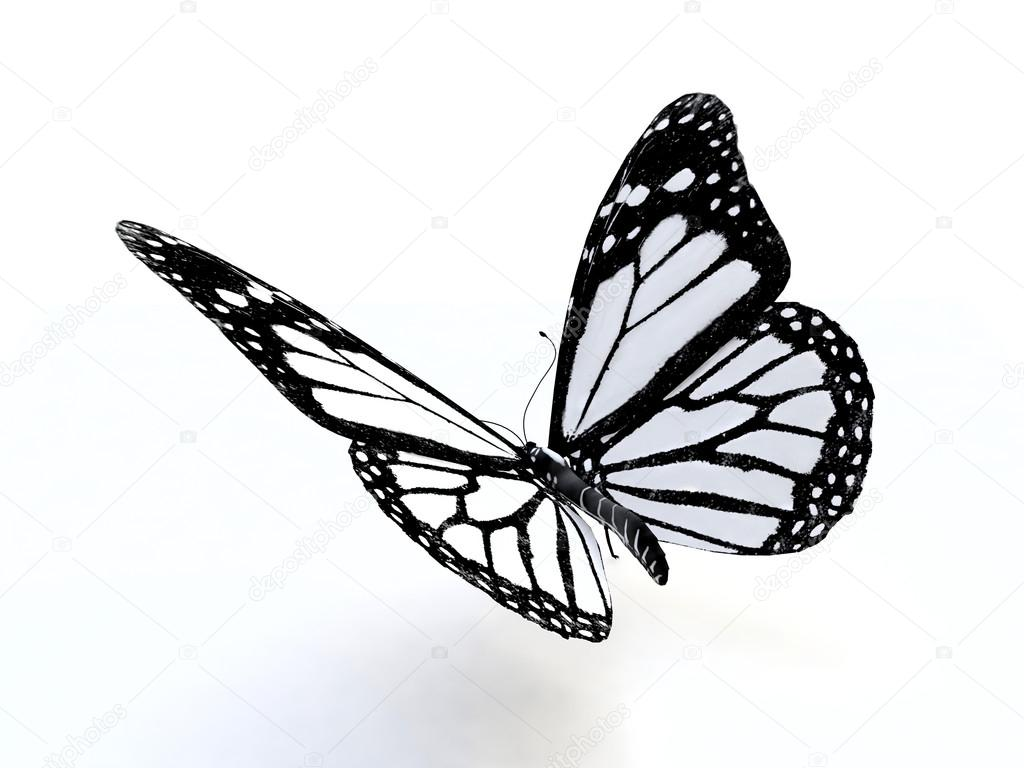Butterfly In 3d Stock Photo C Naira2011 16807457