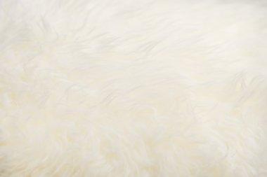 Sheepskin texture