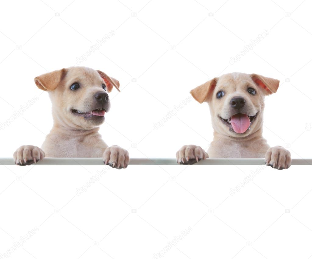 Two dogs with empty board