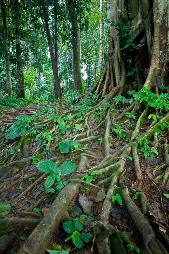 Фотообои Tree roots