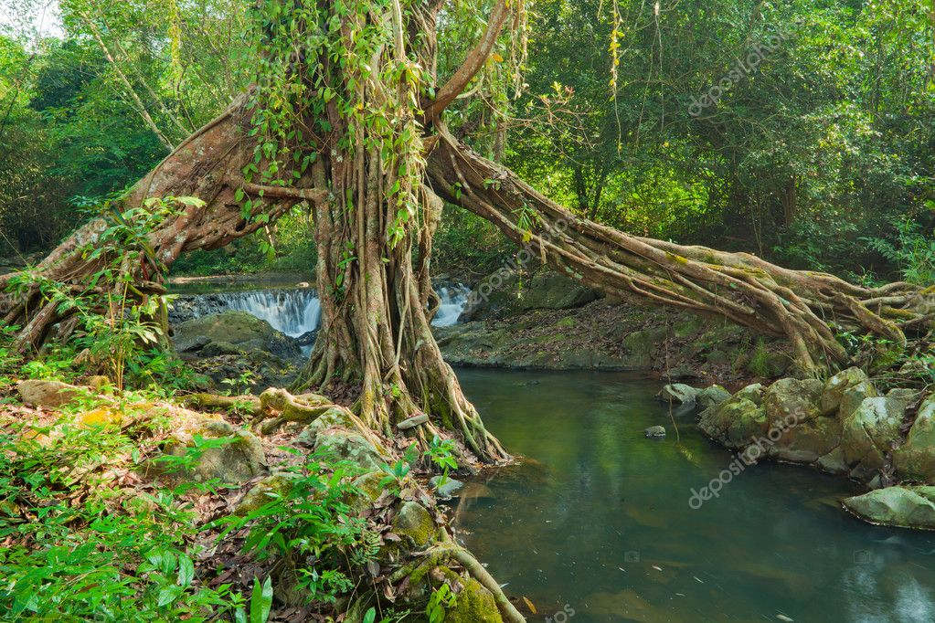 Фотообои корни деревьев