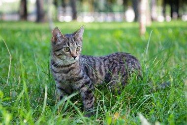 Domestic Cat in the grass